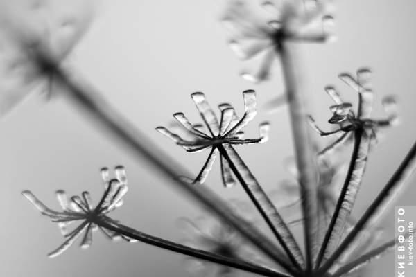 Замороженные растения, ветки и ягоды под коркой льда